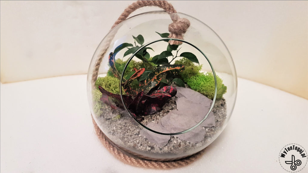 Forest in a jar