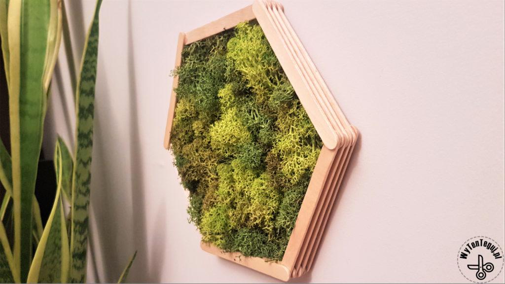 Hexagonal frame with reindeer lichen