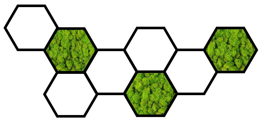Hexagonal frame with reindeer moss