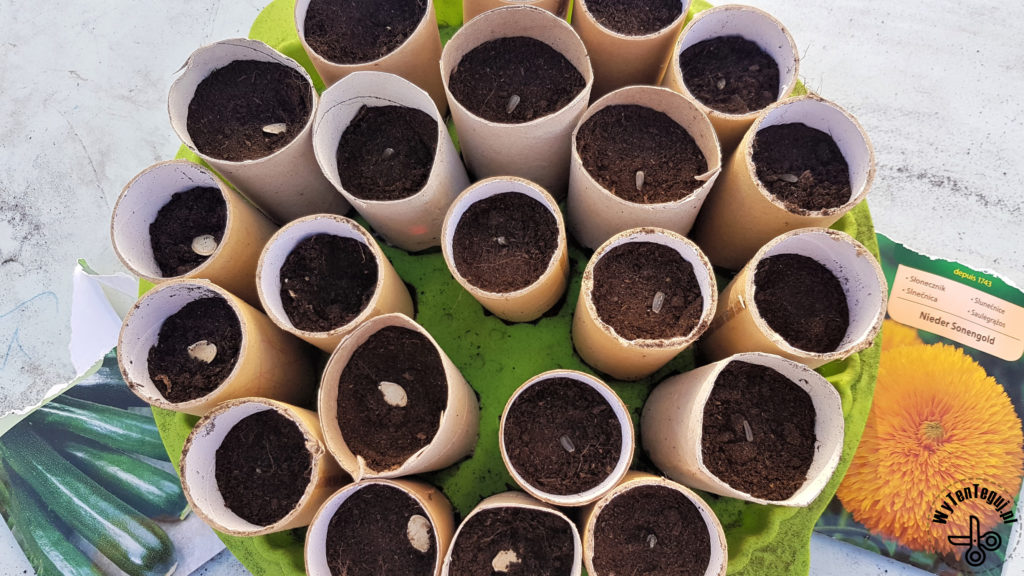 Sowing seeds in paper rolls