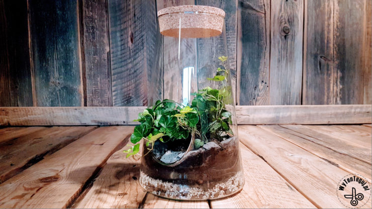 Modern forest in a jar